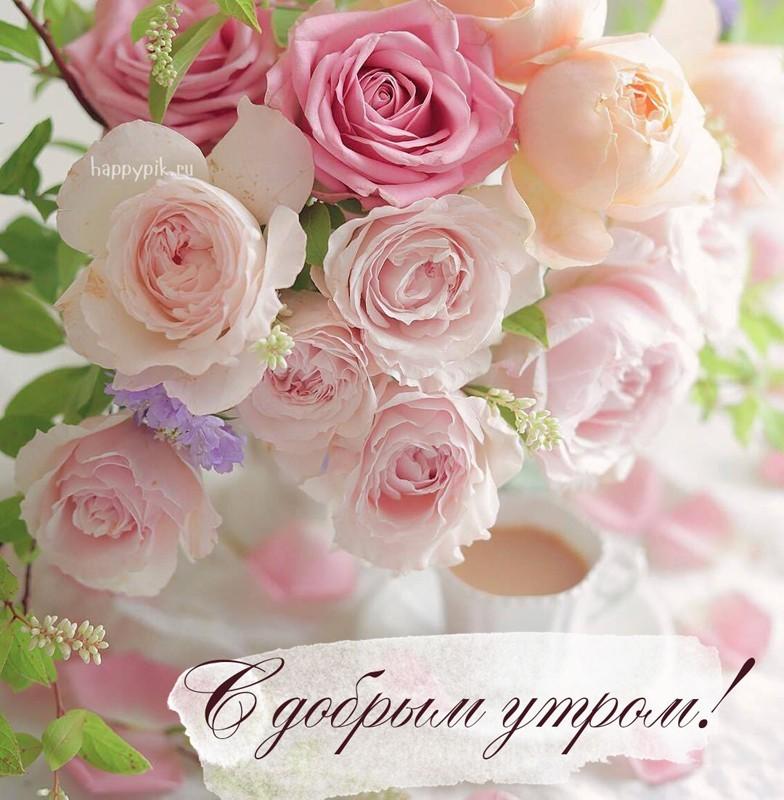 доброе утро картинки розовые розы обратный звонок