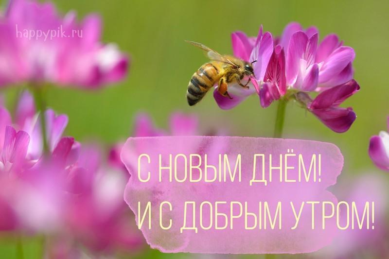 С добрым утром - природа