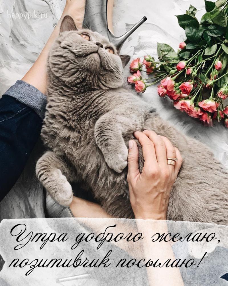 с добрым утром картинки котята красивые