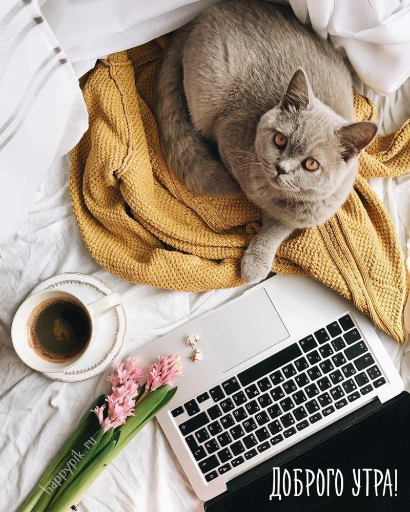 картинки с кошками доброго утра