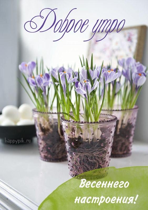 С добрым весенним утром! Картинки о весне.