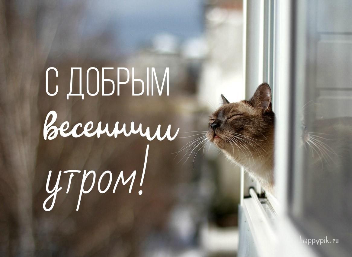 Картинки с кошками с надписью доброе утро