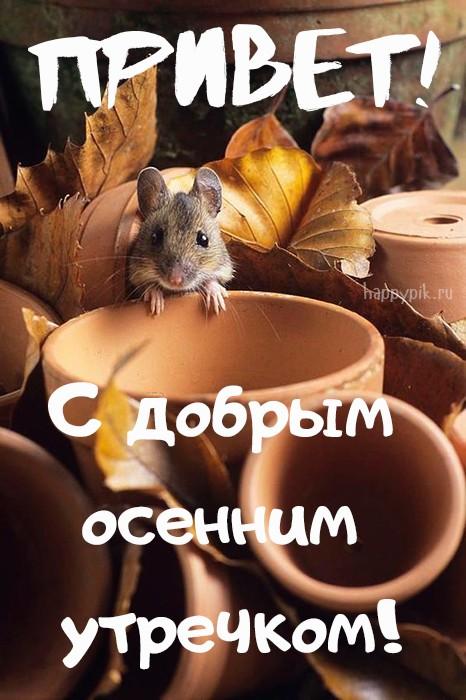 Картинки по запросу Мышь