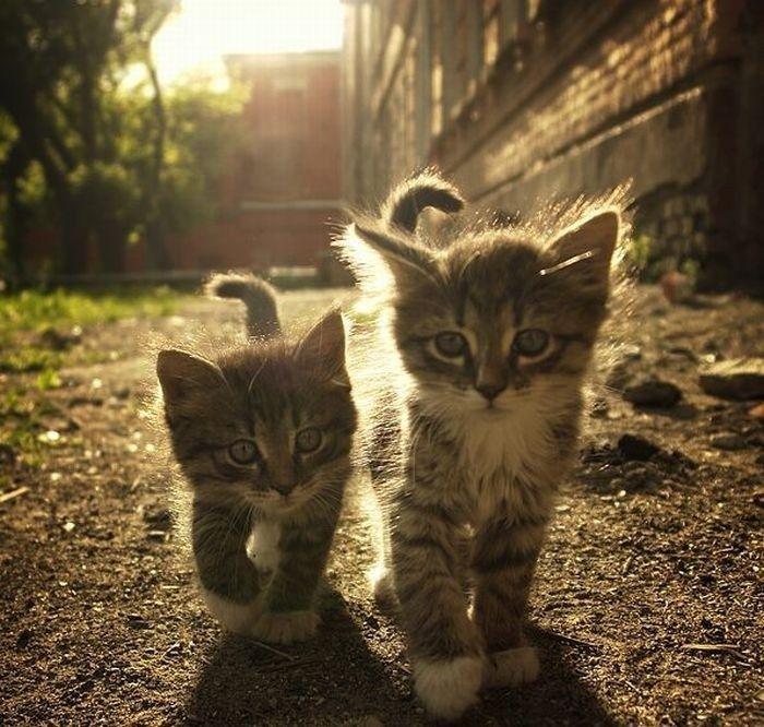 ткани смешные картинки котов и котенка женщины носили косу
