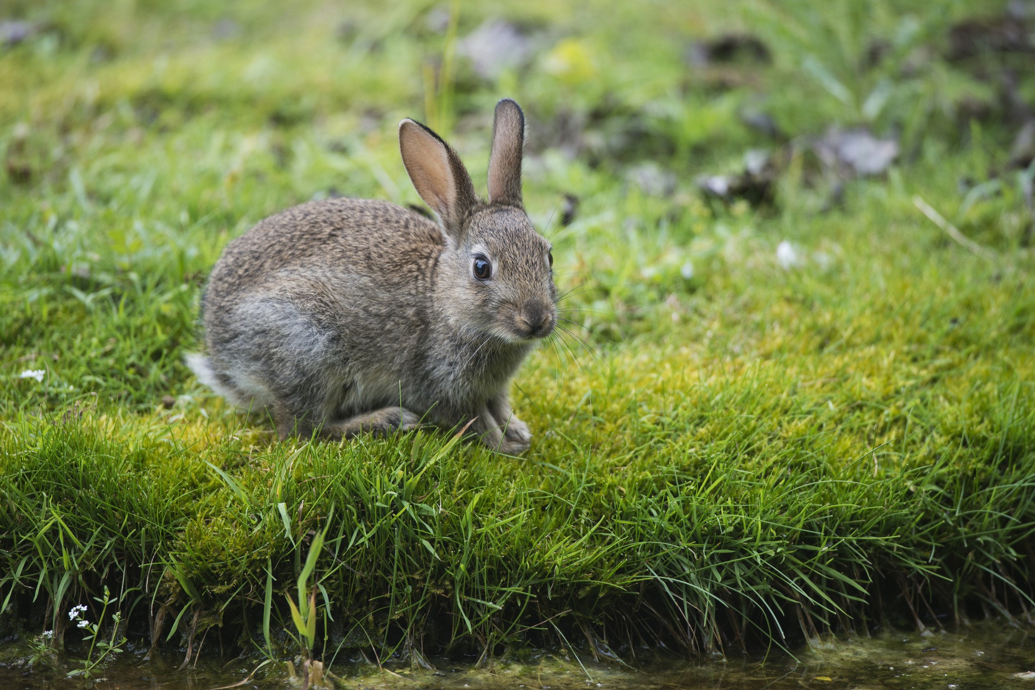 Картинка зайца фотография