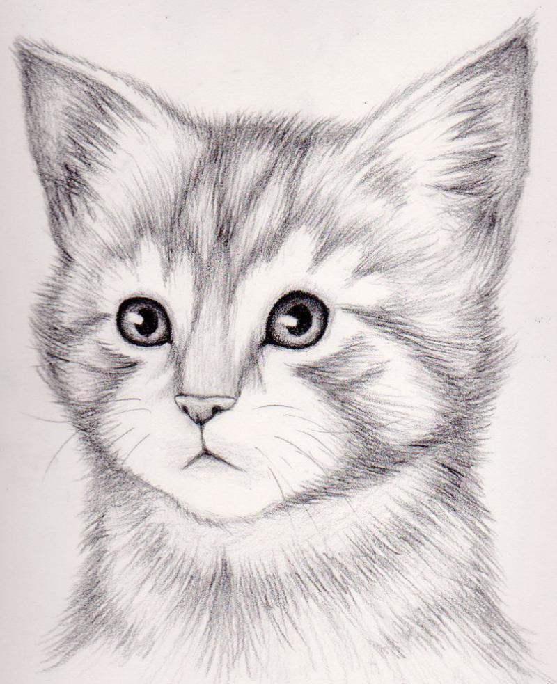 Что нарисовать на открытке кошку карандашом