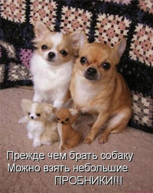 Фото с надписью хочу собаку