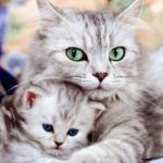 Фото котят. Картинки маленьких котят.