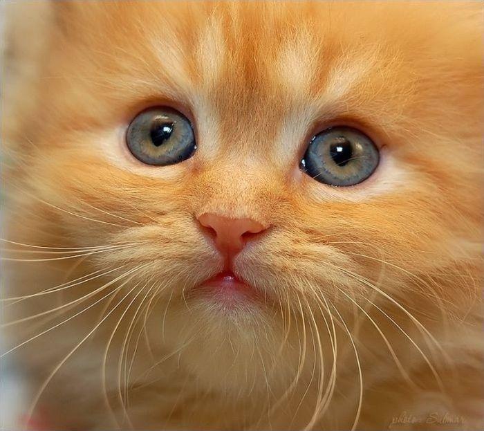 картинки желающих кошек здесь веками