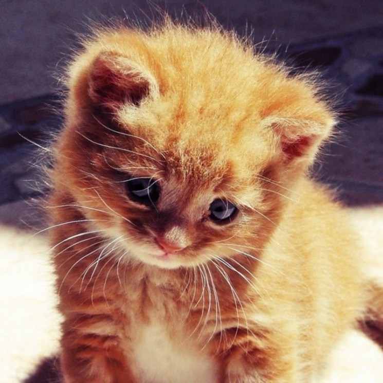Картинки животные прикольные котята