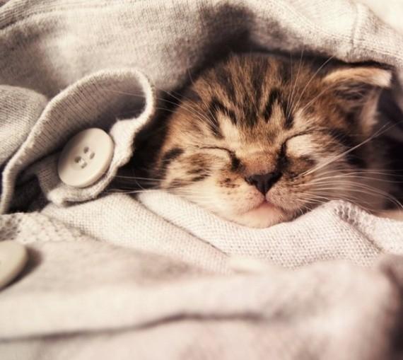 Юбилеем, спокойной ночи картинки с котятами зеленые глаза