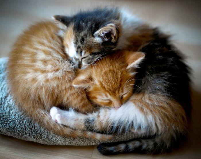 Котята в обнимку картинки красивые