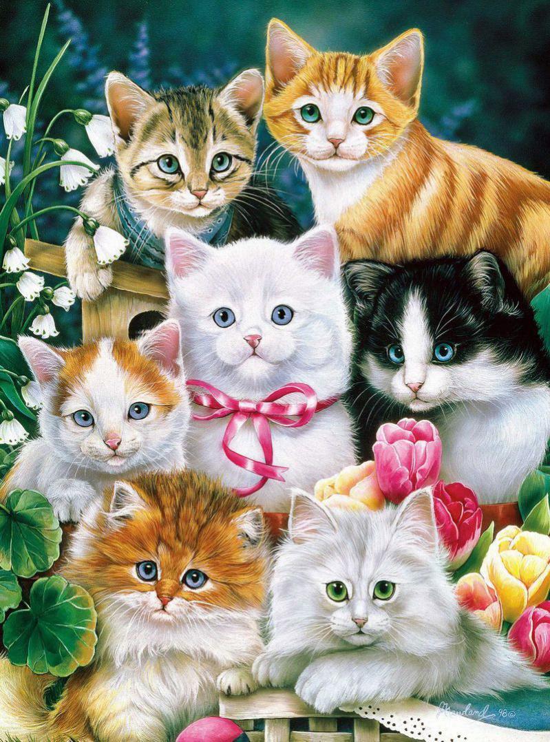 много картинок в одной картинке с котятами подарил