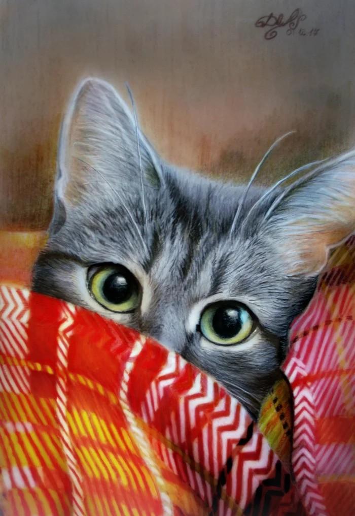 картинки где нарисованы коты простые виды