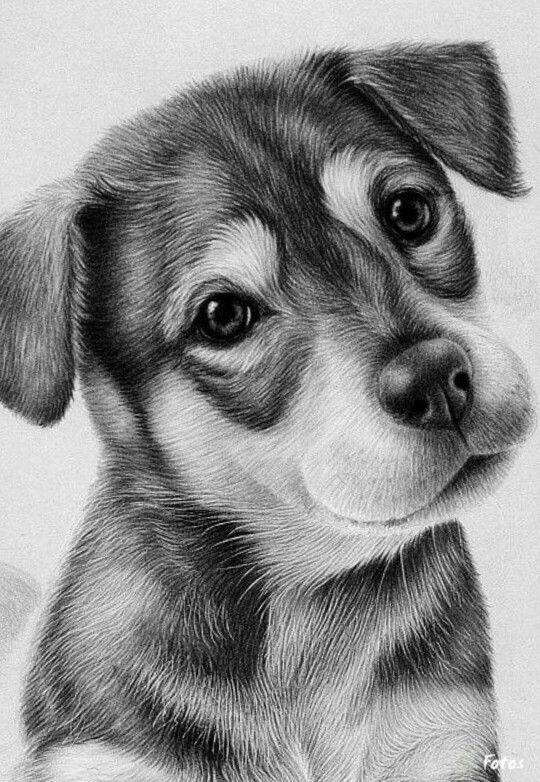 картинки с собачками щенятами карандашом объекты скоростью