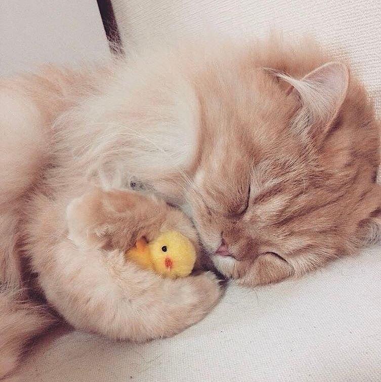 картинка сладких снов котенок собрали для