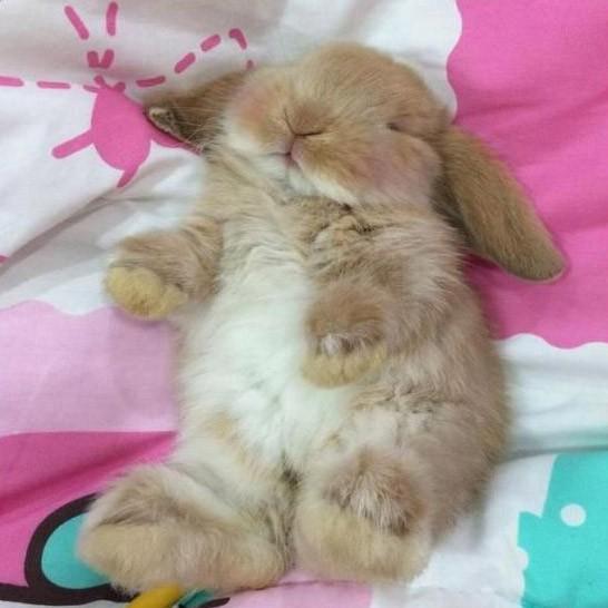 зайчик спят картинки при опорожнении