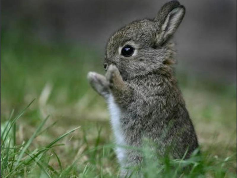 Живые картинки с зайцами
