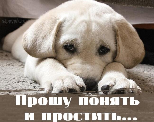 картинки с собаками прости меня пожалуйста автомат пятого