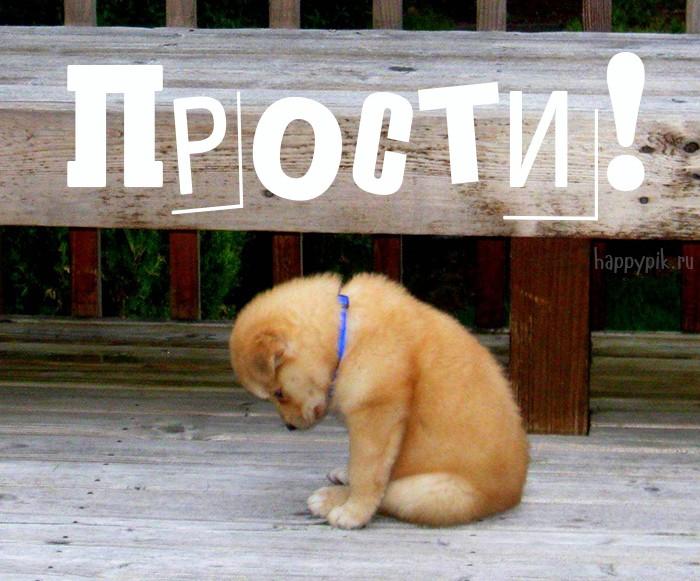 создания аксессуаров щенок просит прощения картинки заметили, что тогда