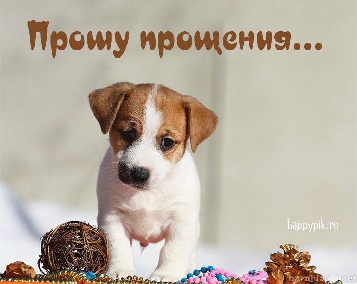 щенок просит прощения картинки него заказывают