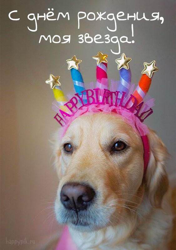 день рождения у собаки поздравление фото эффективны упражнения тренажере
